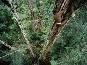 rumah-pohon-suku-korowai-papua31